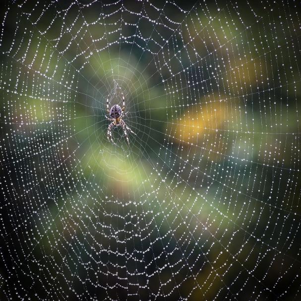 spider-985844_1920